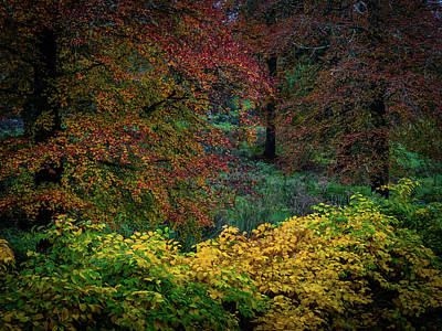 Photograph - Vibrant Bouquet Of Autumnal Colors by James Truett