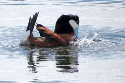 Photograph - Vibrant Courtship by Frank Townsley