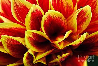 Photograph - Vibrant Dahlia Petals by Kaye Menner