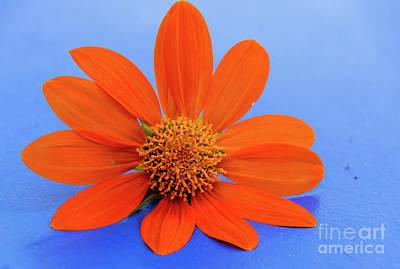 Photograph - Vibrant Daisy by Andrea Anderegg