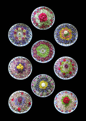 Photograph - Vibrant Floating Flowers On Black by Gill Billington