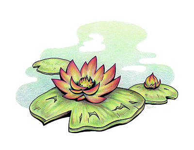 Drawing - Vibrant Flower 2 Water Lily by Sipporah Art and Illustration