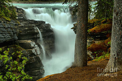 Photograph - Vibrant Foliage At Athabasca by Adam Jewell