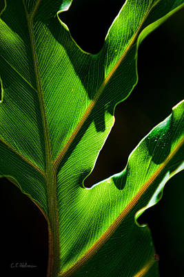 Photograph - Vibrant Green by Christopher Holmes