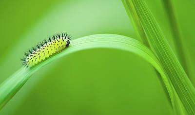 Photograph - Vibrant Larva Insect Art by Wall Art Prints
