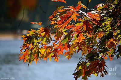 Photograph - Vibrant Oak by Susan Herber