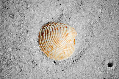Photograph - Vibrant Orange Ribbed Sea Shell In Fine Wet Sand Macro Color Splash Black And White by Shawn O'Brien