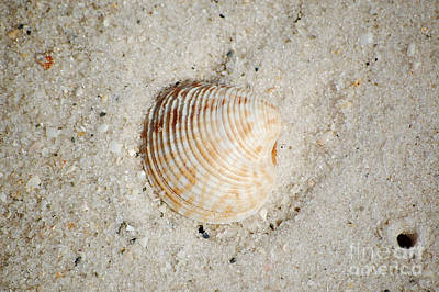 Photograph - Vibrant Orange Ribbed Sea Shell In Fine Wet Sand Macro by Shawn O'Brien