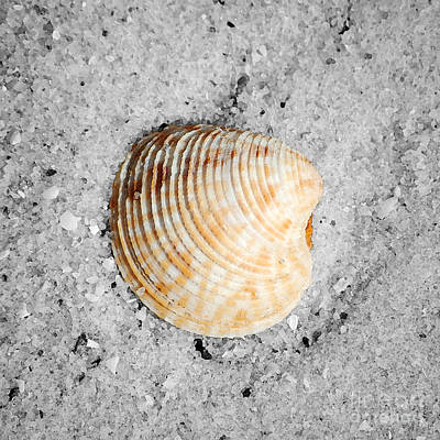 Photograph - Vibrant Orange Ribbed Sea Shell In Fine Wet Sand Macro Square Format Water Color Color Splash Bw by Shawn O'Brien