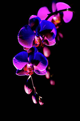 Photograph - Vibrant Orchids by Ann Bridges
