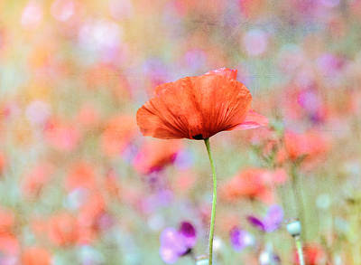 Art Print featuring the photograph Vibrant Poppies In A Field by Marion McCristall