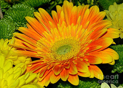 Photograph - Vibrant Red Yellow Gerbera By Kaye Menner by Kaye Menner