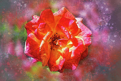 Photograph - Vibrant Rose by Judi Saunders