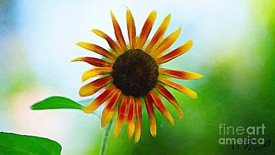Photograph - Vibrant Sunflower  by Paul Wilford