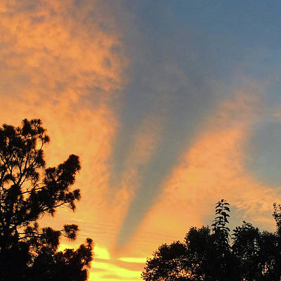 Photograph - Vibrant Sunset by Matthew Seufer