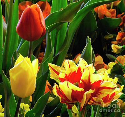 Photograph - Vibrant Tulips by Angela DeFrias