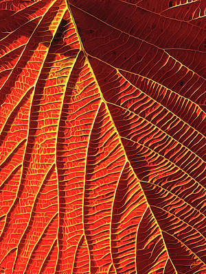 Autumn Leaf Digital Art - Vibrant Viburnum by ABeautifulSky Photography by Bill Caldwell