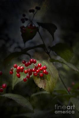Photograph - Viburnum by Elena Nosyreva