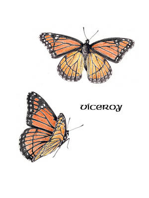 Drawing - Viceroy Butterfly by Betsy Gray