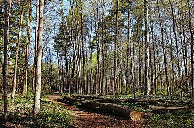 Photograph - Victoria Woods In Spring by Debbie Oppermann