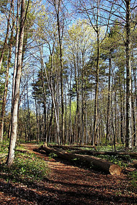 Photograph - Victoria Woods In Spring I by Debbie Oppermann