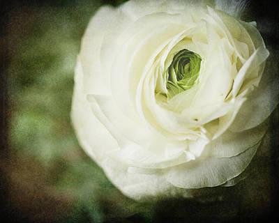 Fleur De Lis Photograph - Victorian Ranunculus by Lisa Russo