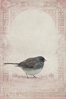 Photograph - Victorian Winter Bird by Norma Warden