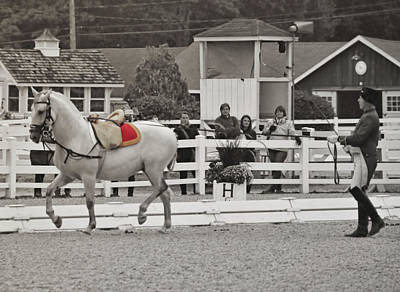 Photograph - Vienna Schooling by JAMART Photography