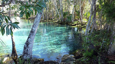 Photograph - View 2 Of Spring 3 At Three Sisters Springs by Judy Wanamaker