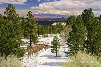 Photograph - View From Boulder Mountain Utah by Roxie Crouch