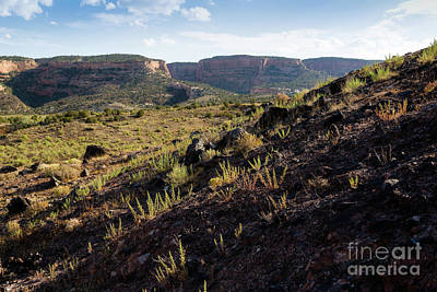 View From Dinosaur Hill Art Print by Jon Burch Photography