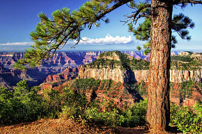 Photograph - View From North Rim Trail by Carolyn Derstine