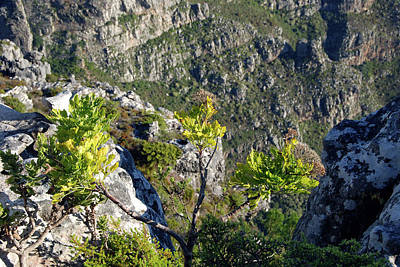 Photograph - View From Table Mountain by Harvey Barrison