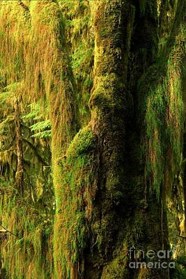 Photograph - View Into The Rainforest by Adam Jewell