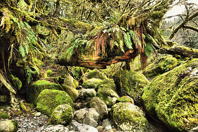 View Of A Rain Forest  Art Print by Jeff Swan