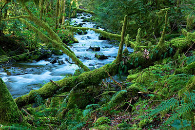 Forest Floor Photograph - View Of A Stream by Jeff Swan