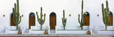 Baja California Photograph - View Of Cardon Cactus Plants by Panoramic Images