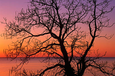 View Of Ocean Through Silhouetted Tree Art Print by Panoramic Images