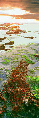 Roca Photograph - View Of Seaweed On The Beach, Las by Panoramic Images
