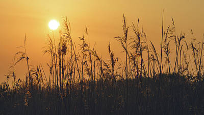 Photograph - View Of Sun Setting Behind Long Grass A by Jacek Wojnarowski
