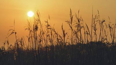 Art Print featuring the photograph View Of Sun Setting Behind Long Grass A by Jacek Wojnarowski
