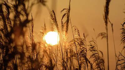 View Of Sun Setting Behind Long Grass B Art Print