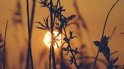 View Of Sun Setting Behind Long Grass D Art Print