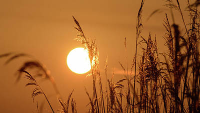 Art Print featuring the photograph View Of Sun Setting Behind Long Grass E by Jacek Wojnarowski