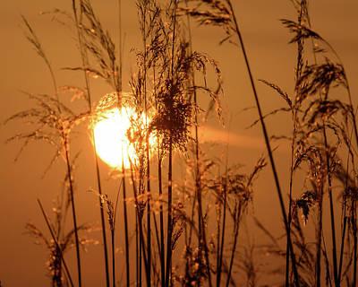 Art Print featuring the photograph View Of Sun Setting Behind Long Grass F by Jacek Wojnarowski