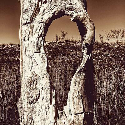 Photograph - View Through The Hollow Tree by Michael Oceanofwisdom Bidwell