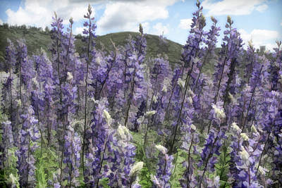 Photograph - View Through The Lupines by Donna Kennedy