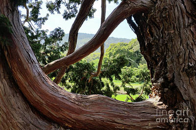View Through The Tree Art Print by Carol Lynn Coronios