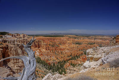 Photograph - View With Old Tree At Bryce Canyon National Park by Dan Friend