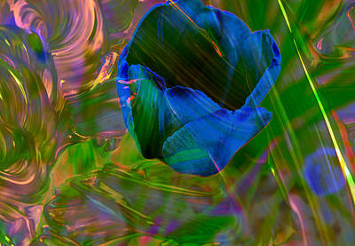 Viewing A Tulip Art Print by Jeff Swan